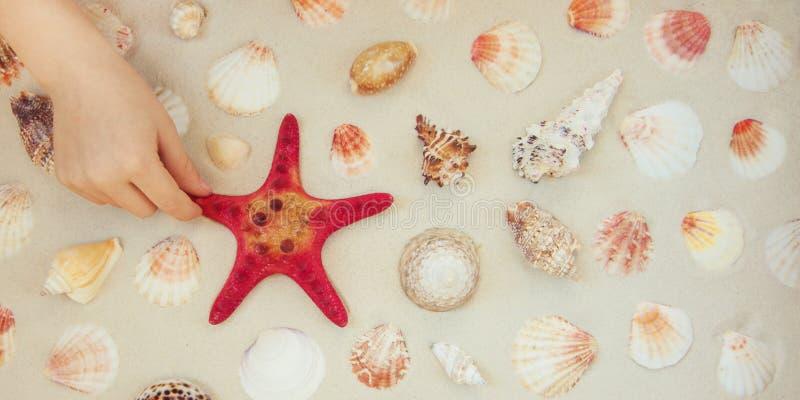 海壳和红色星鱼在沙滩与拷贝空间文本的 库存图片