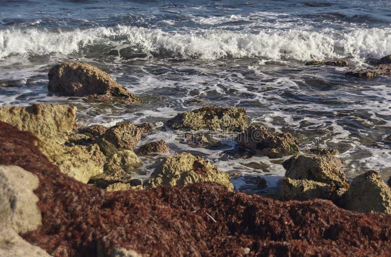 海波浪细节碰撞在岩石海岸的在墨西哥#3 库存图片