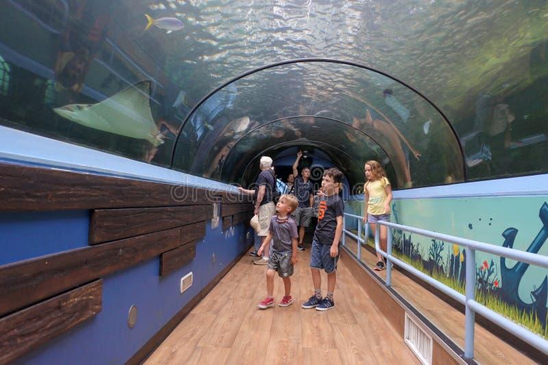 海洋生活水族馆在悉尼新南威尔斯澳大利亚 库存图片