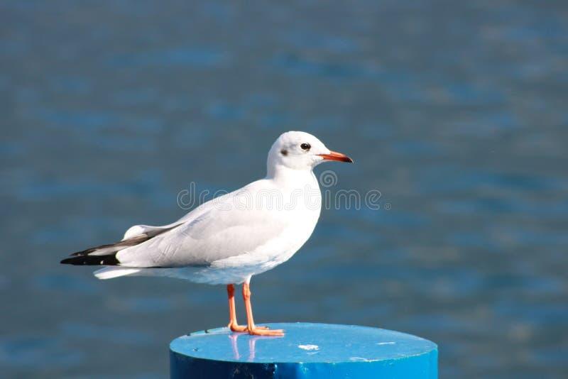 海鸥湖夏天 库存照片
