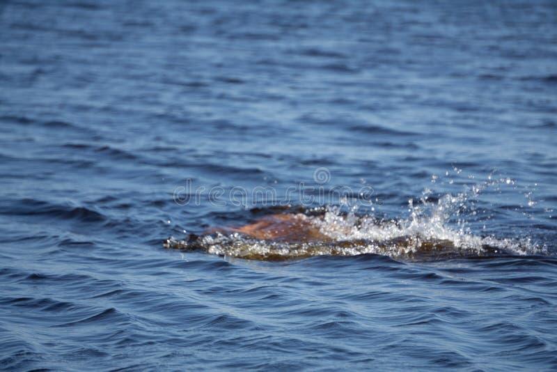 消失在波浪的女孩,跳跃和浸没在刷新的海,海洋,在一个热的夏日 免版税图库摄影