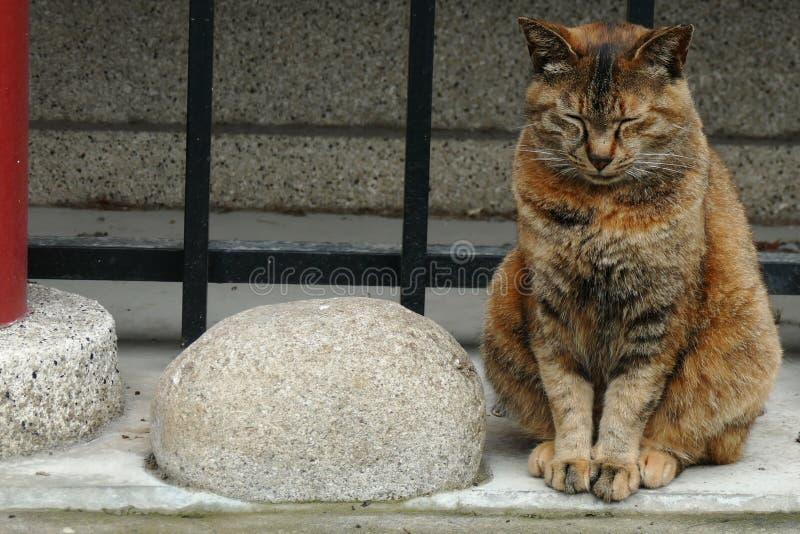 深深地放松了猫在一座小寺庙在上野公园,东京,日本 库存照片