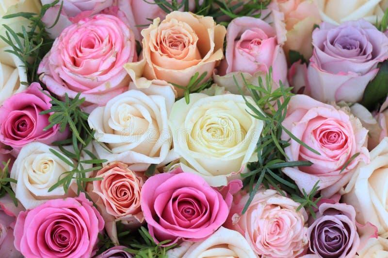 混杂的桃红色玫瑰 免版税图库摄影