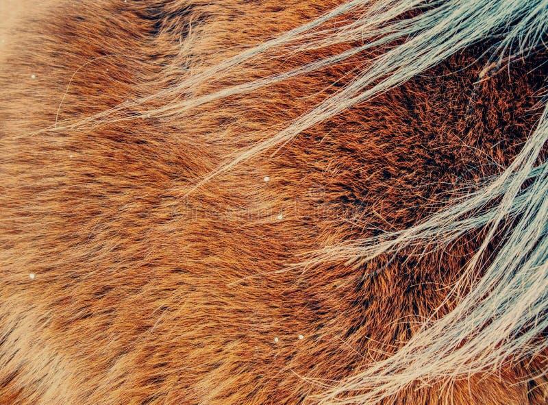 温暖的冬天马毛皮 布朗毛皮细节 免版税库存图片