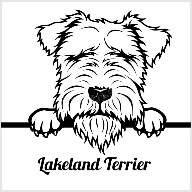 湖水地区狗-偷看狗- -品种在白色隔绝的面孔头 库存例证