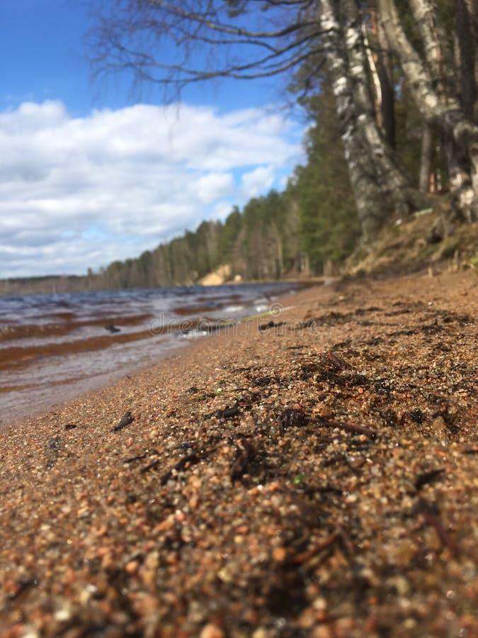 湖的岸的春天森林是阴沉的,水是冷的,但是夏天很快来临! 免版税库存照片