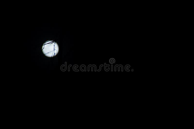 满月-正面图 免版税库存图片