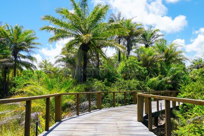 木桥梁透视在深热带森林里 免版税库存照片
