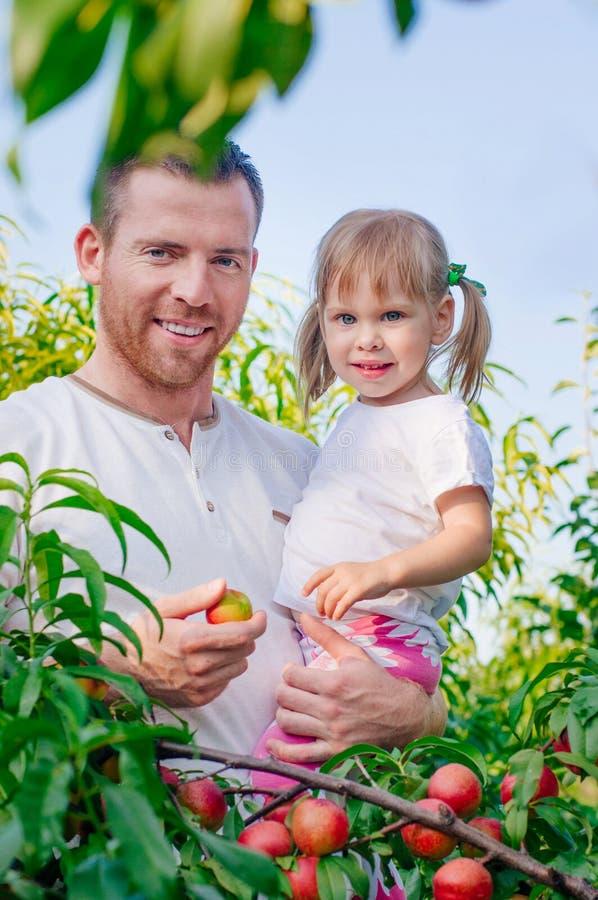 有她的采摘桃子的父亲的女孩在庭院里 免版税库存图片