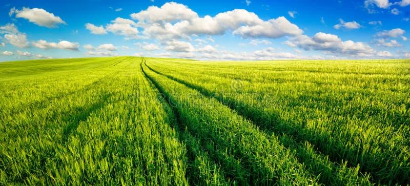 有好的天空蔚蓝的浩大的绿色领域全景 免版税库存图片
