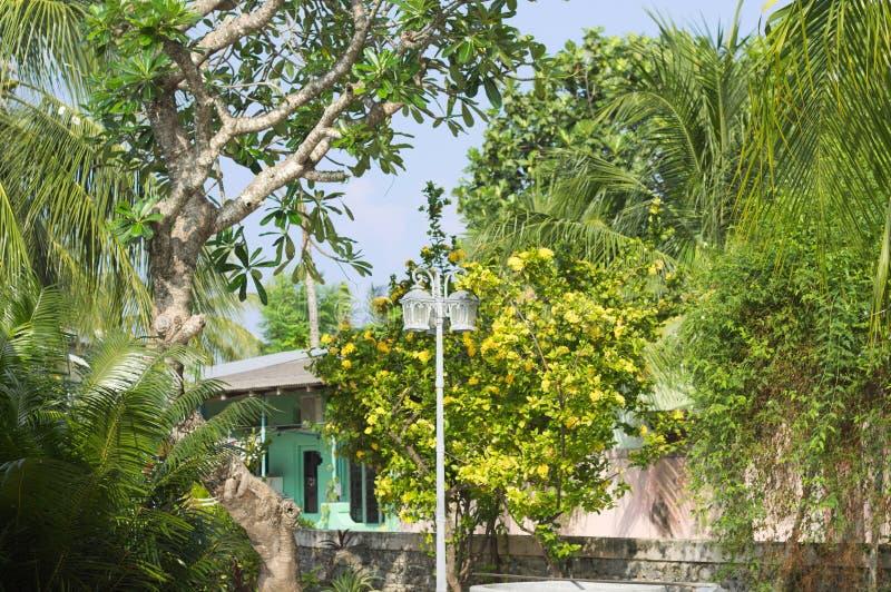 有植物和街灯的马尔代夫庭院 免版税库存照片