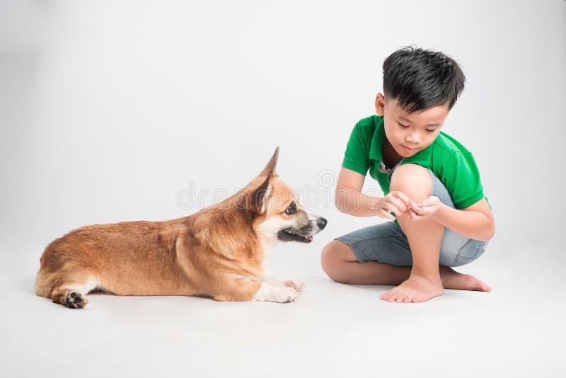 有狗的逗人喜爱的小男孩在白色背景 免版税图库摄影