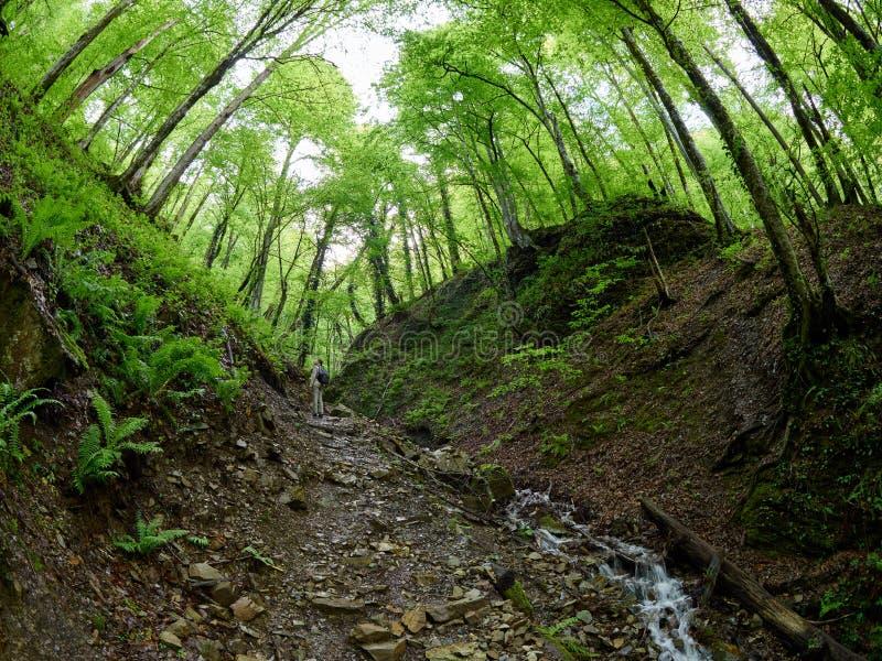 有背包的一个女孩在春天森林攀登山 免版税图库摄影
