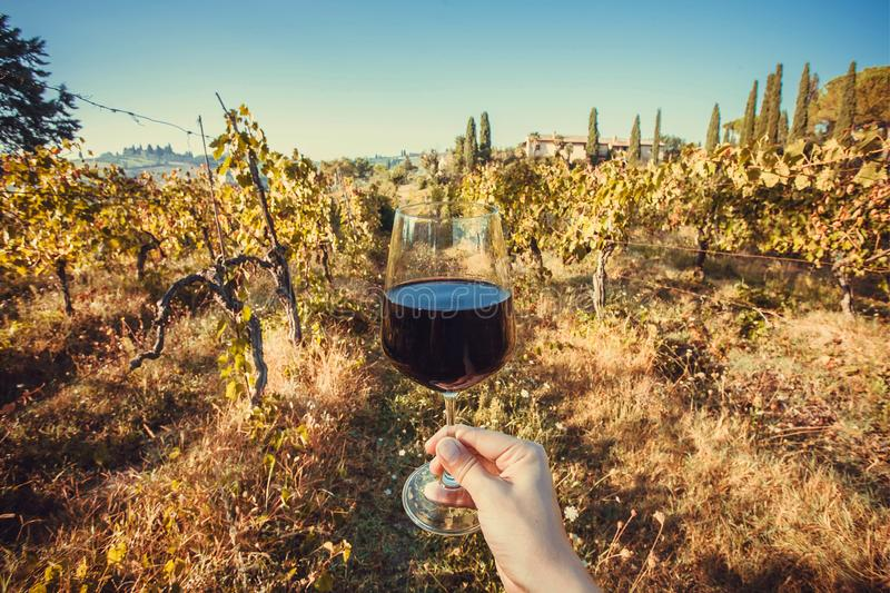 有酒杯的愉快的饮者手 自然葡萄围场农场在早晨 图库摄影