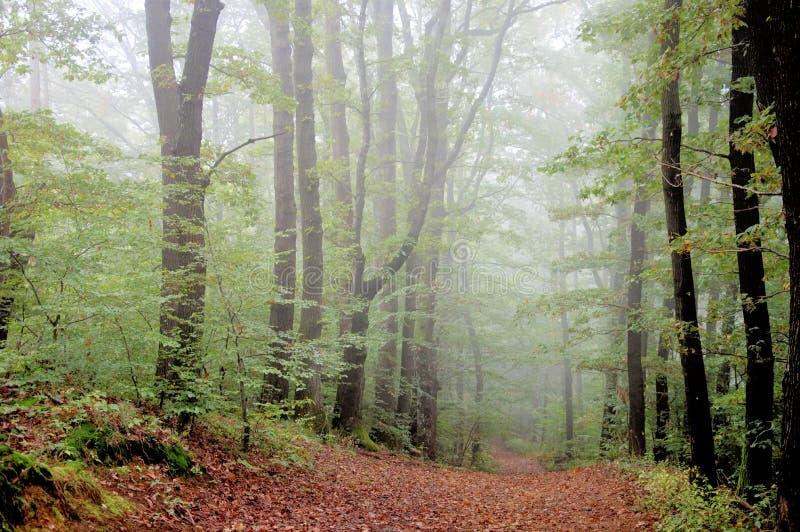 有雾的森林在秋天 图库摄影
