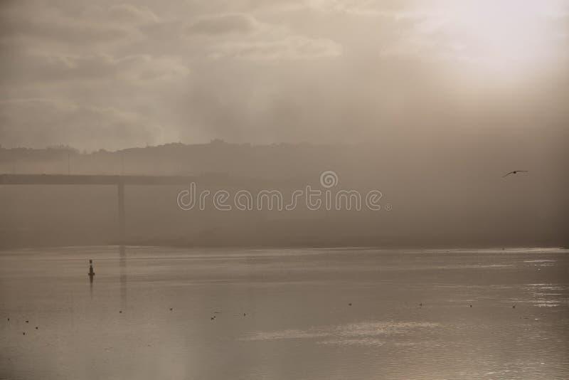 有雾的黎明的河 免版税库存照片