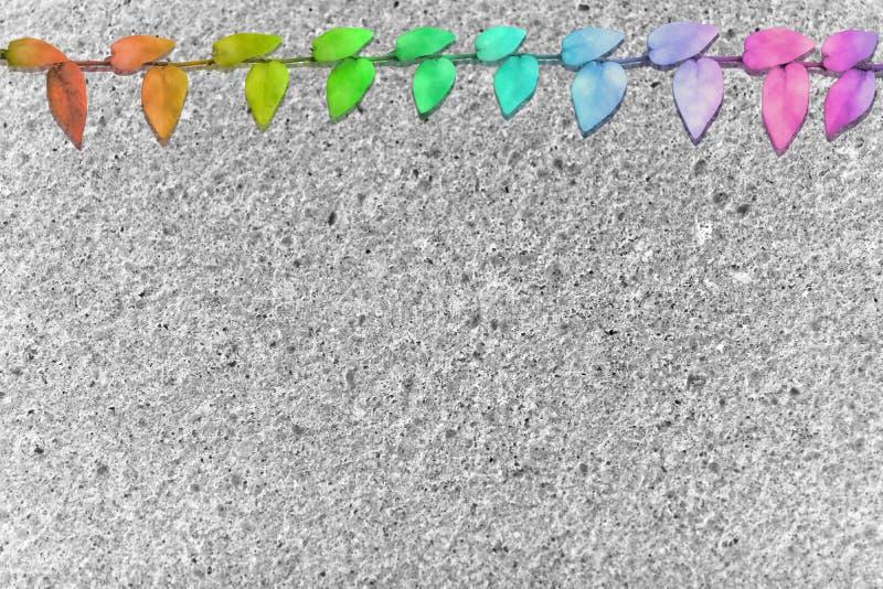 抽象绿色留下墨西哥雏菊自然边界灰色磨石子地地板 免版税图库摄影