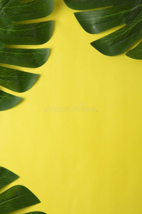 抽象背景夏天 与epty空间的热带棕榈叶在中部 平的位置,顶视图 库存图片