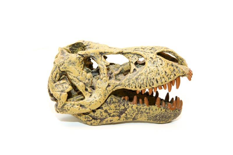 暴龙雷克斯的一块假头骨 免版税库存照片