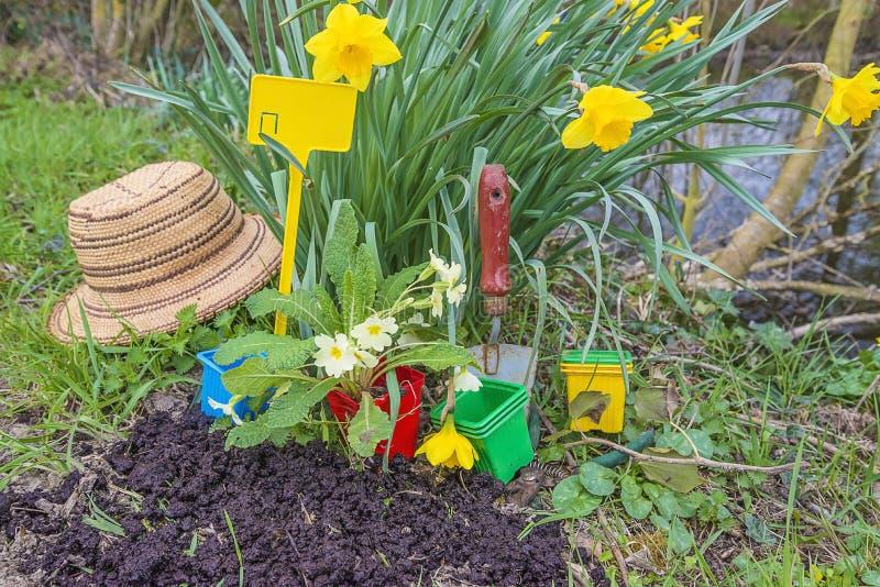春天从事园艺的概念:园艺工具,铁锹,有primerose的,草帽,黄色黄水仙花盆 免版税库存照片