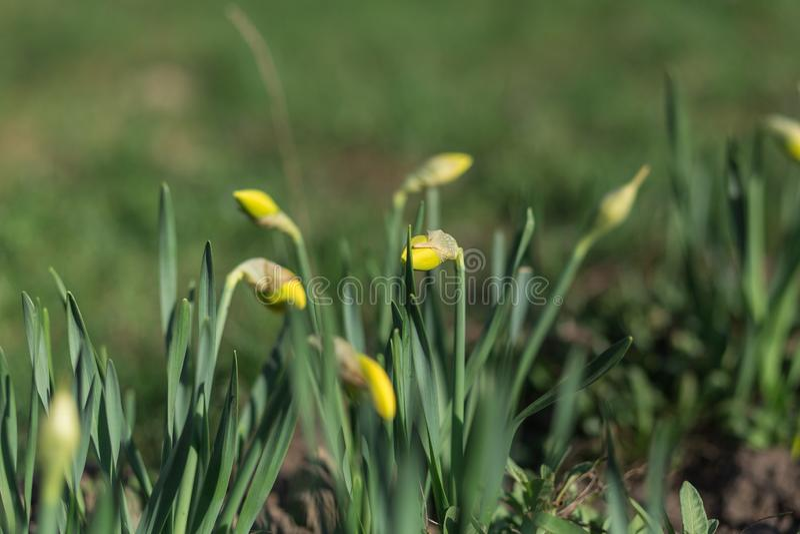 春天花开始开花 免版税库存照片