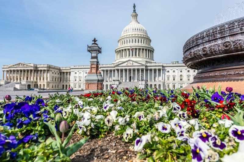 春天花和喷泉在美国国会 库存图片