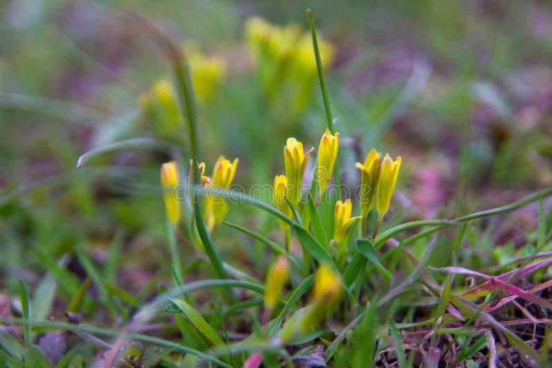 春天花和背景与bokeh 免版税图库摄影