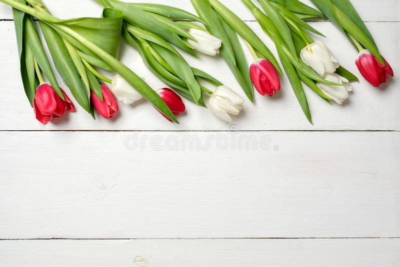 春天背景、郁金香在上面在白色木书桌上,贺卡模板妇女的或母亲节,横幅大模型与拷贝s 免版税库存图片