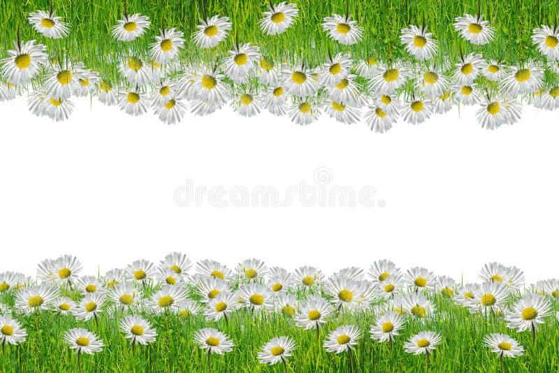 春黄菊框架,伟大作为背景 免版税图库摄影