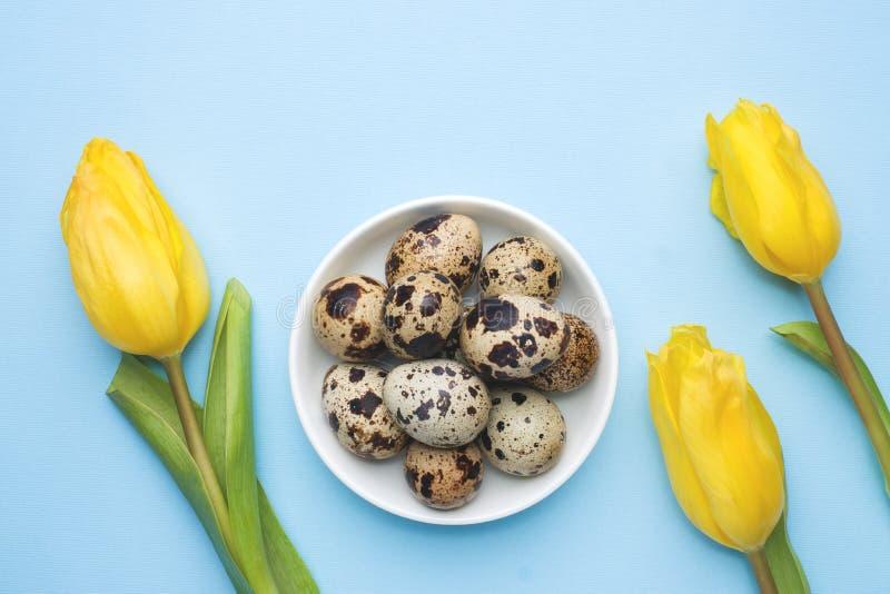明亮的花郁金香和鹌鹑蛋在蓝色背景 春天和复活节与拷贝空间的假日概念 免版税库存照片