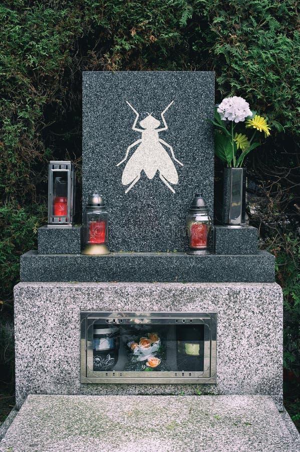 昆虫减少,下降并且被消灭对死亡在绝种以后 库存照片