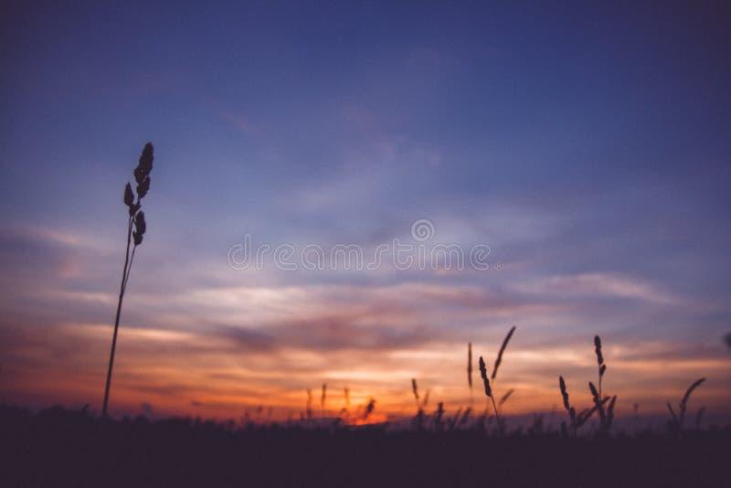 日落天空云彩 乡下风景在日落黎明日出的风景五颜六色的天空下 在地平线,天际的太阳 库存图片