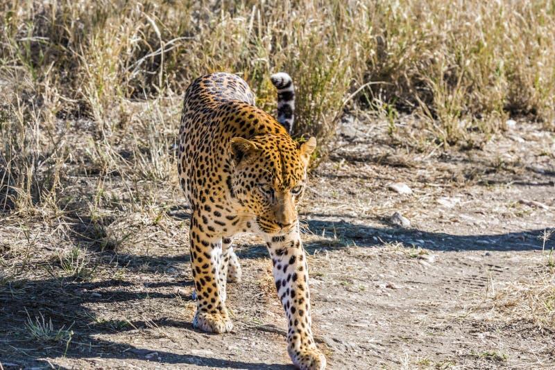 旅行向纳米比亚 免版税库存图片
