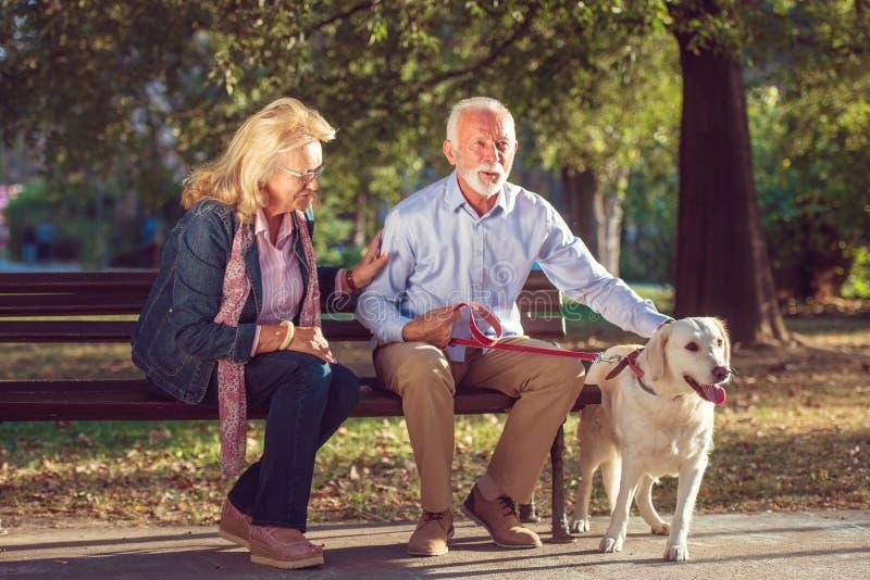 愉快的资深夫妇户外与狗享用 库存图片
