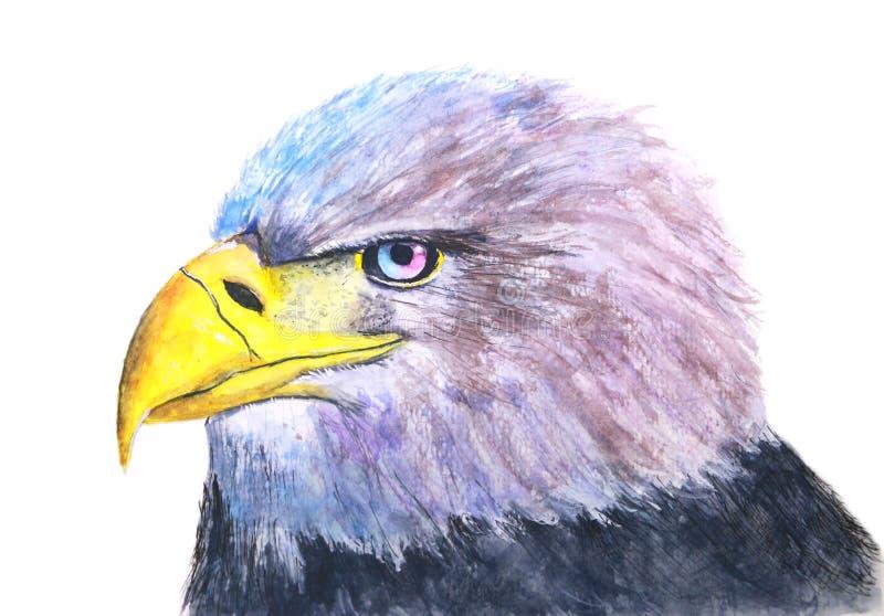 手拉的水彩一只鸟老鹰的被隔绝的例证在白色背景中 向量例证