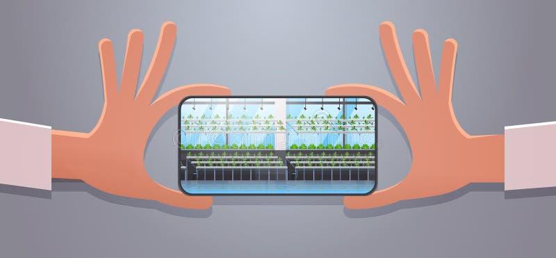 手采取图片有机水耕的绿色植物的藏品智能手机荡桨耕种农场现代温室内部 库存例证