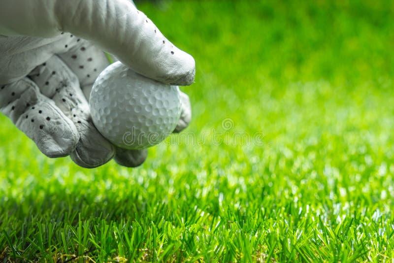 拾起在绿草的高尔夫球 免版税库存照片