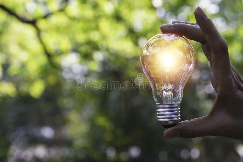 拿着能量力量概念的手电灯泡在自然背景中 库存照片