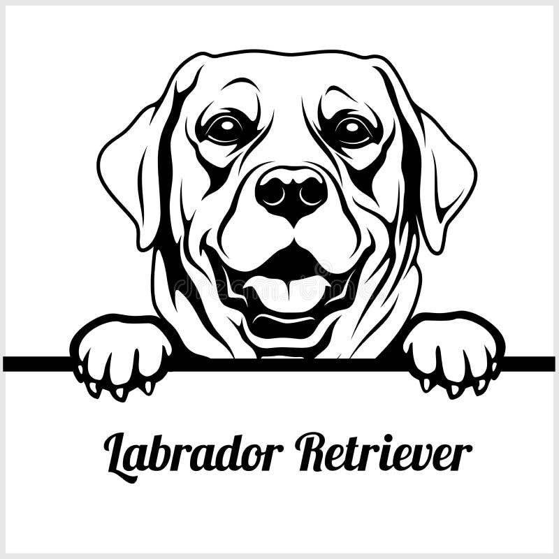 拉布拉多猎犬-偷看狗- -品种在白色隔绝的面孔头 皇族释放例证