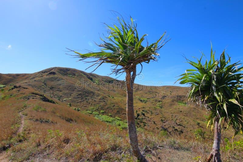斐济的海岛的内部风景的看法 免版税库存照片