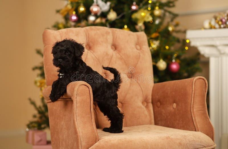 新年小狗 免版税库存图片
