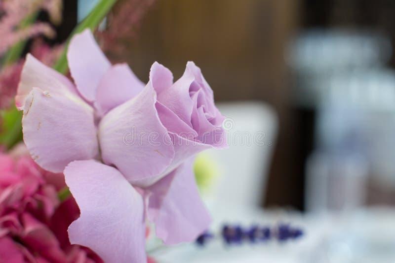 新鲜的桃红色玫瑰的特写镜头精美芽与展开的瓣的 与鲜花的事件装饰 库存照片