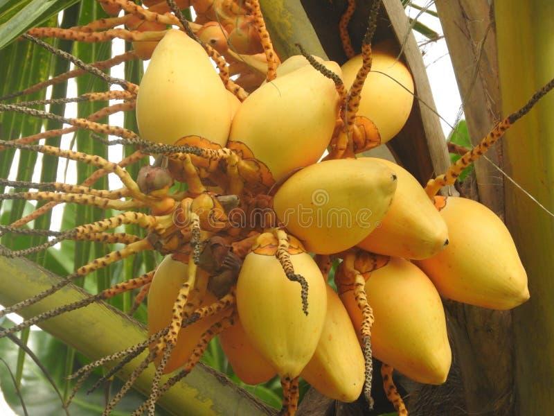 新鲜的水果和蔬菜在努沃勒埃利耶,斯里兰卡 图库摄影