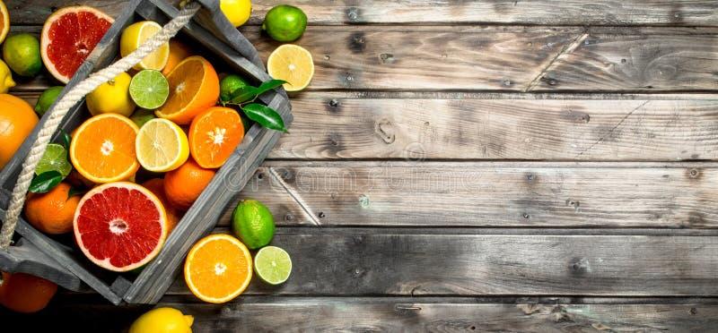 新鲜的柑橘片断在箱子的 免版税图库摄影