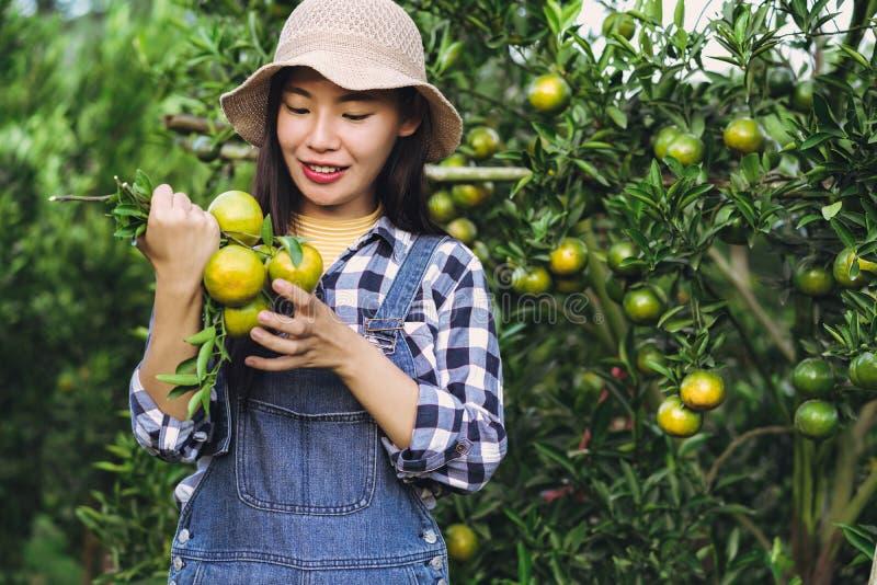 收获橙色果子的年轻可爱的亚裔妇女在有机农场 库存图片