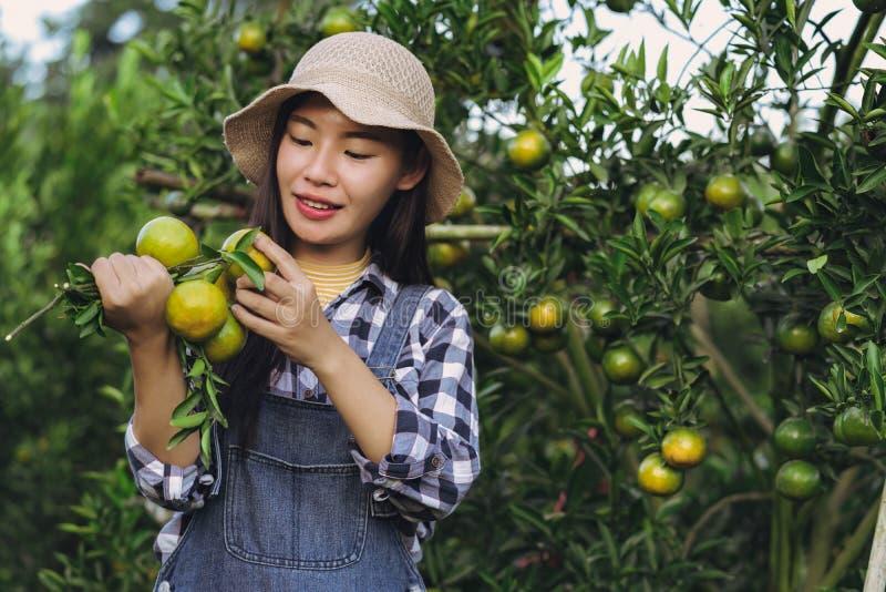 收获橙色果子的年轻可爱的亚裔妇女在有机农场 免版税库存图片