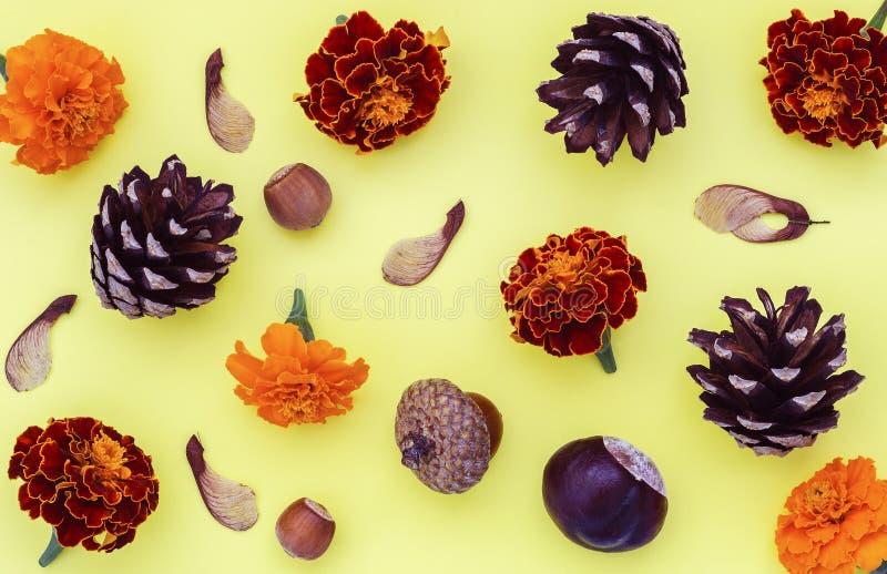 栗子杉木锥体黑莓榛子和槭树种子在黄色背景 免版税库存照片
