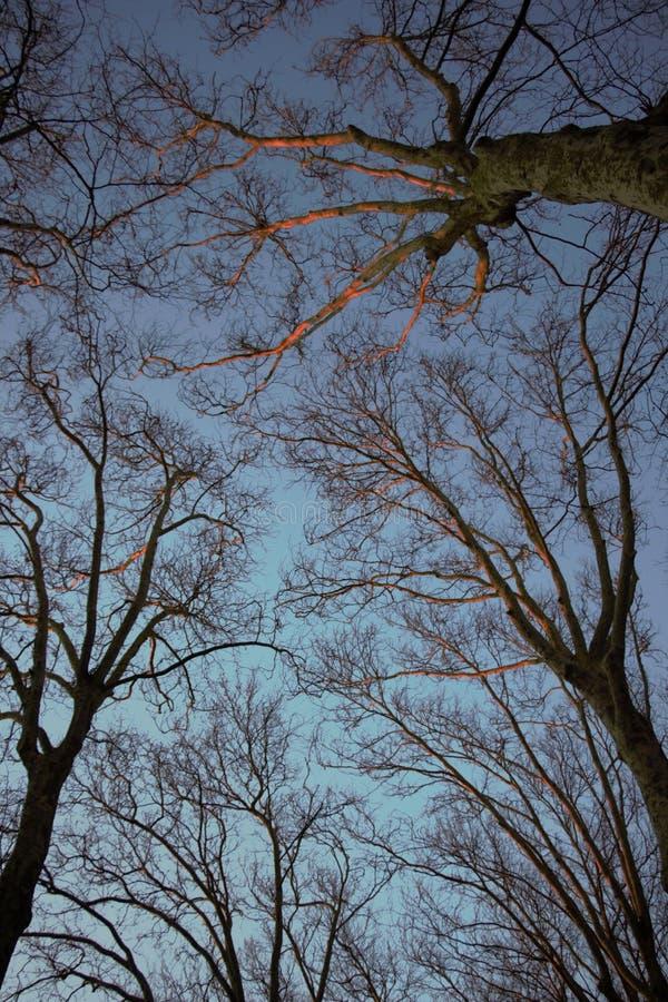 树橙色 免版税图库摄影