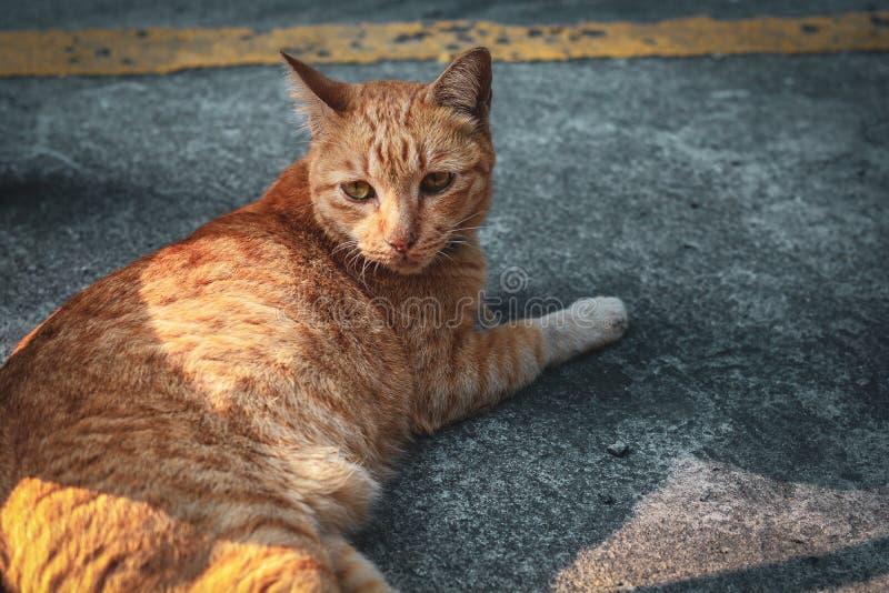 睡觉在地板上的逗人喜爱的猫portait 看某事的小猫 与老虎的猫镶边了放松 免版税图库摄影