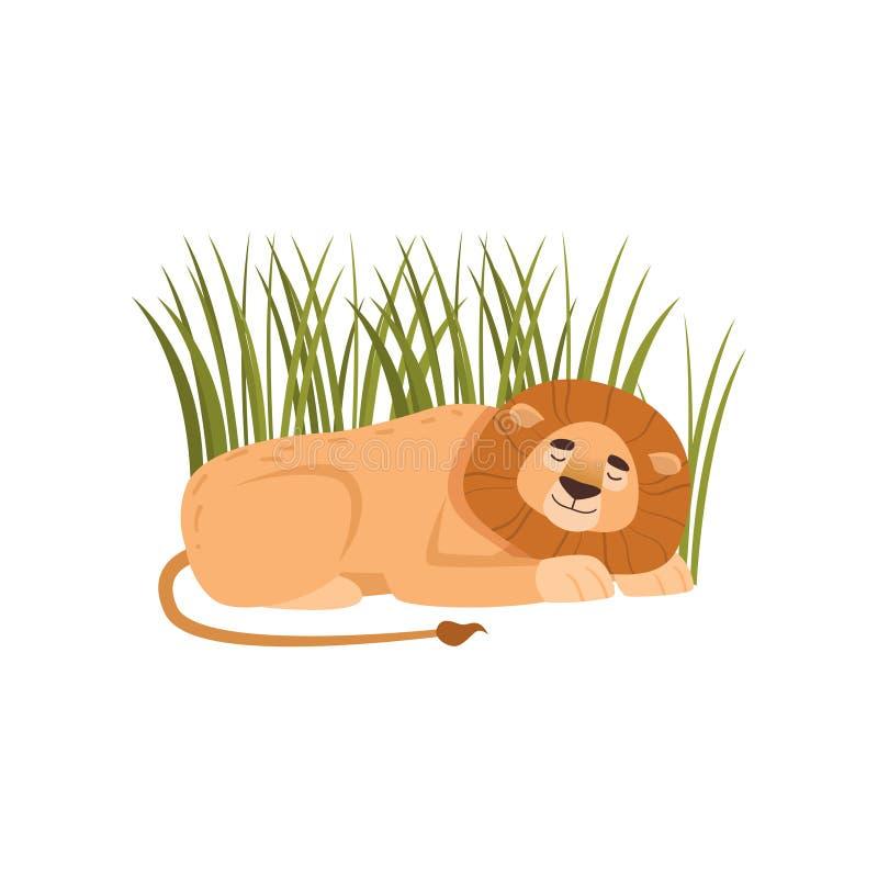 睡觉在草的大狮子隔绝在白色背景 库存例证
